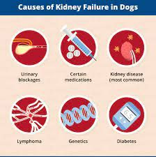 Cause of Kidney Failure in a Dog