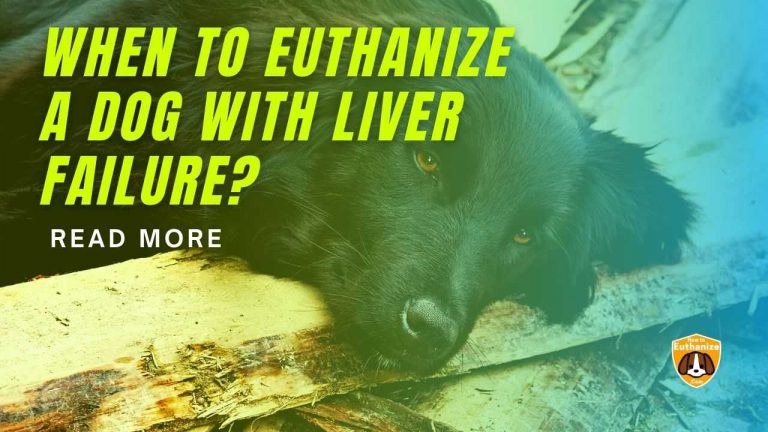 When To Euthanize A Dog With Liver Failure?