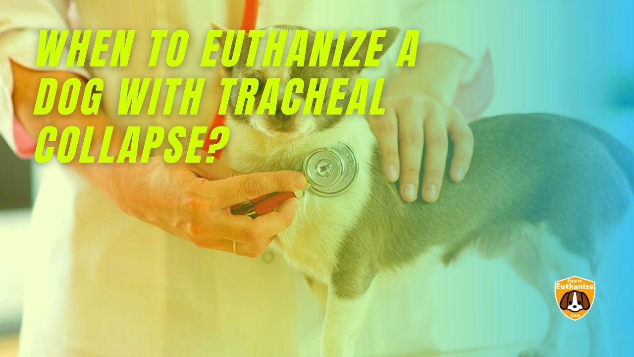 Dog With Tracheal Collapse