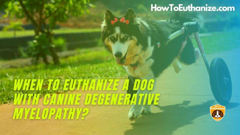 When to Euthanize a Dog with Canine Degenerative Myelopathy?