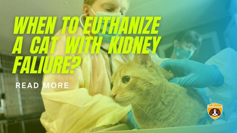 When To Euthanize a Cat with Kidney Failure?