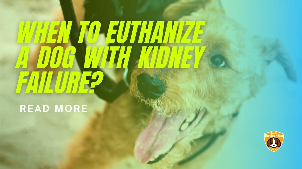 Euthanize A Dog With Kidney Failure
