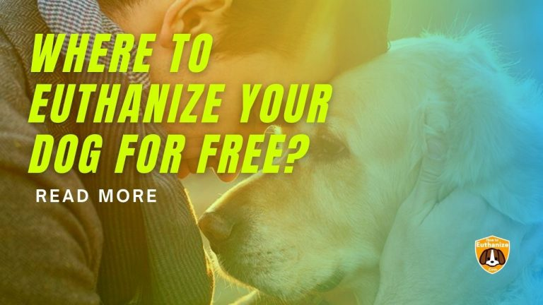 Where To Euthanize Your Dog For Free or very Cheap?