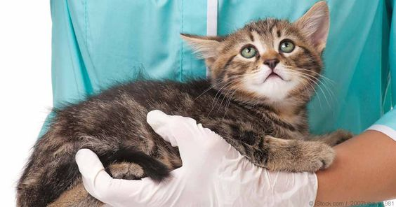 Euthanize a Cat With Kidney Failure