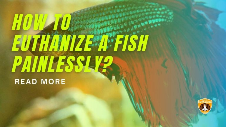 How to Euthanize a Fish Painlessly? 2 Quick and Humanely Ways!!
