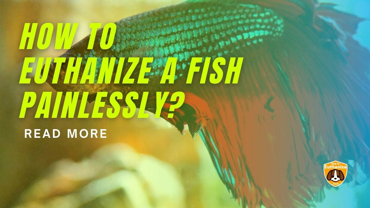Euthanize a Fish Painlessly