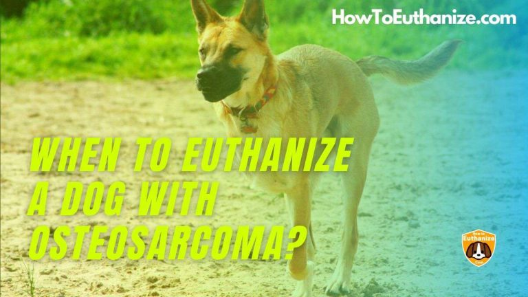 What Is The Right Time To Euthanize A Dog With Osteosarcoma?