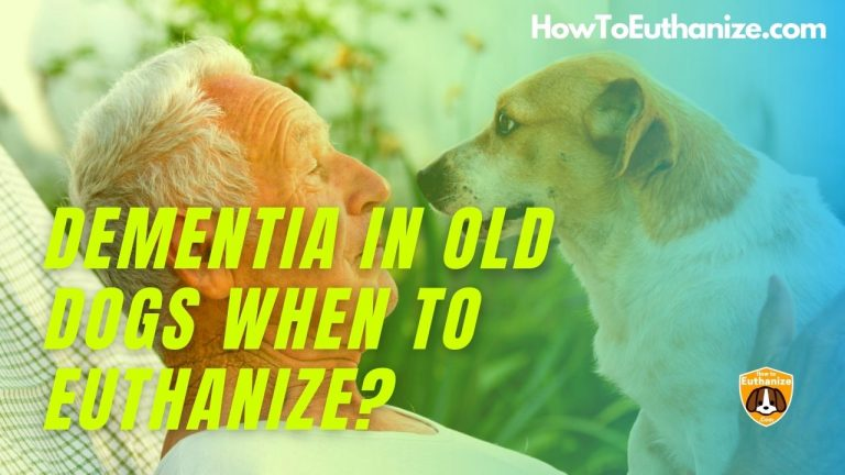 Dementia In Dogs: When To Euthanize? Symptoms, Treatments Explained