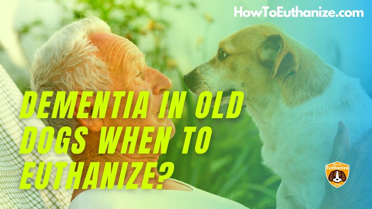 Dementia In Old Dogs When To Euthanize