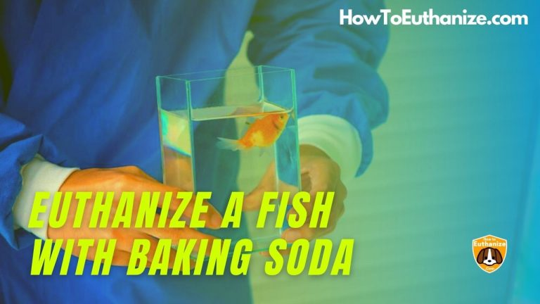 How To Humanely Euthanize A Fish With Baking Soda?